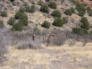 Non-native grasses and remnants of an old homestead on the edges of West Clear Creek Wilderness indicated a long history of human interaction and manipulation of region. Photo by author.