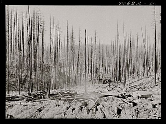 Russell Lee, Tillamook burn, October 1941, Tillamook County, Oregon, Library of Congress