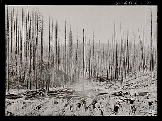 Russell Lee, Tillamook burn, October 1941, Tillamook County, Oregon, Library of Congress